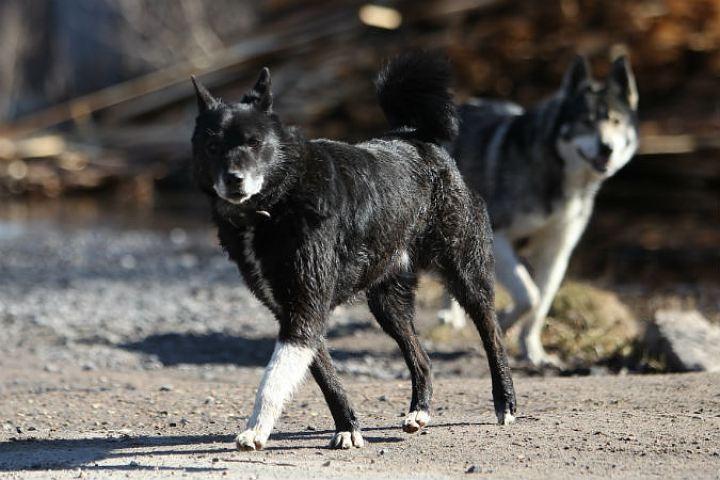 ВТурции бродячие собаки обгрызли припаркованную машину