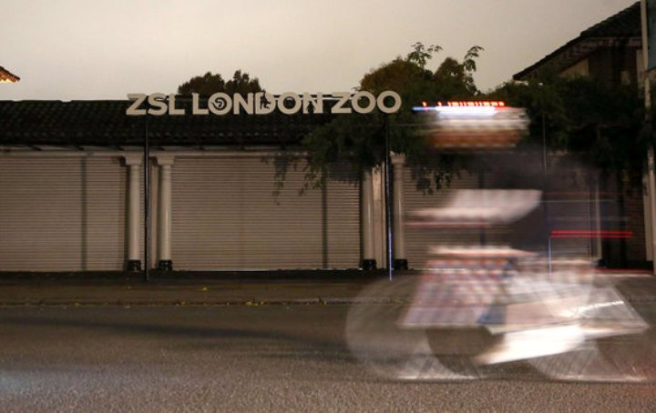 О побеге гориллы из вольера в зоопарке, расположенном на территории Риджентс-парк, стало известно в четверг, 13 октября