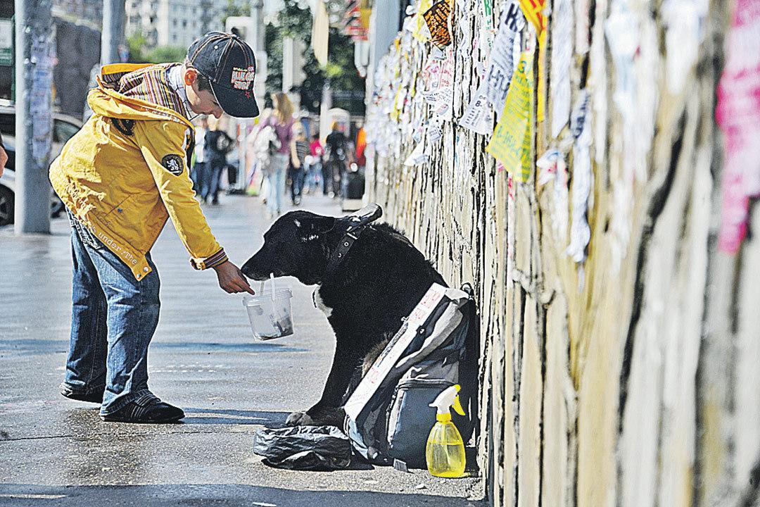 Собачек и кошечек всегда жалко. Им подают охотнее, чем людям. Только деньги идут совсем не на корм. И век таких животинок недолог.