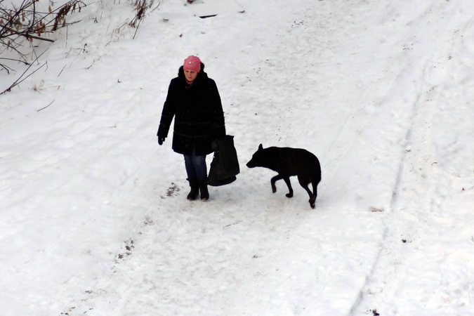 Ярославцы выйдут ссобственными питомцами намитинг против хабаровских живодерок