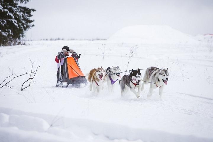 Гонки пройдут 3 и 4 января в деревне Жеребенки в Завьяловском районе. Фото: Алексей Красноперов