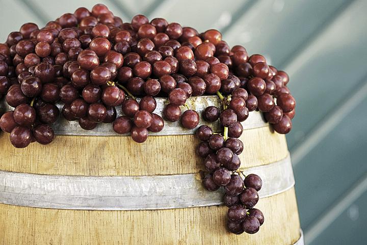 Именно Голицын был основоположником виноделия в Крыму и основателем производства игристых вин в Абрау-Дюрсо.
