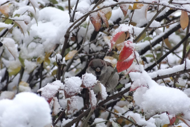 12 января в Югре ожидается умеренный морозец, но с ветром