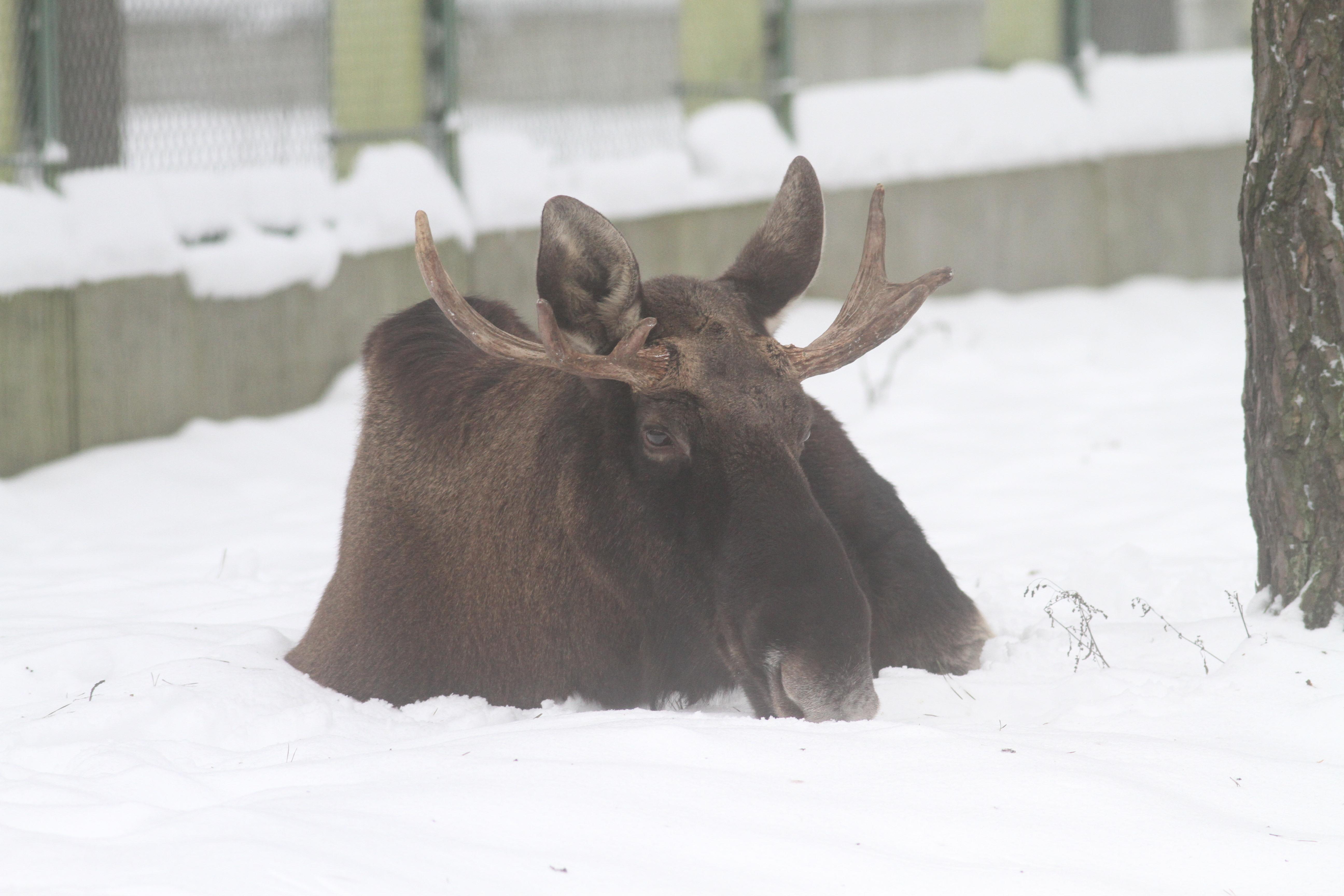 ВВолгоградской области браконьеры заубийство лося приговорены кгоду социальных работ