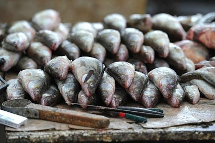ВСанкт-Петербург непустили 80т рыбы изКитая