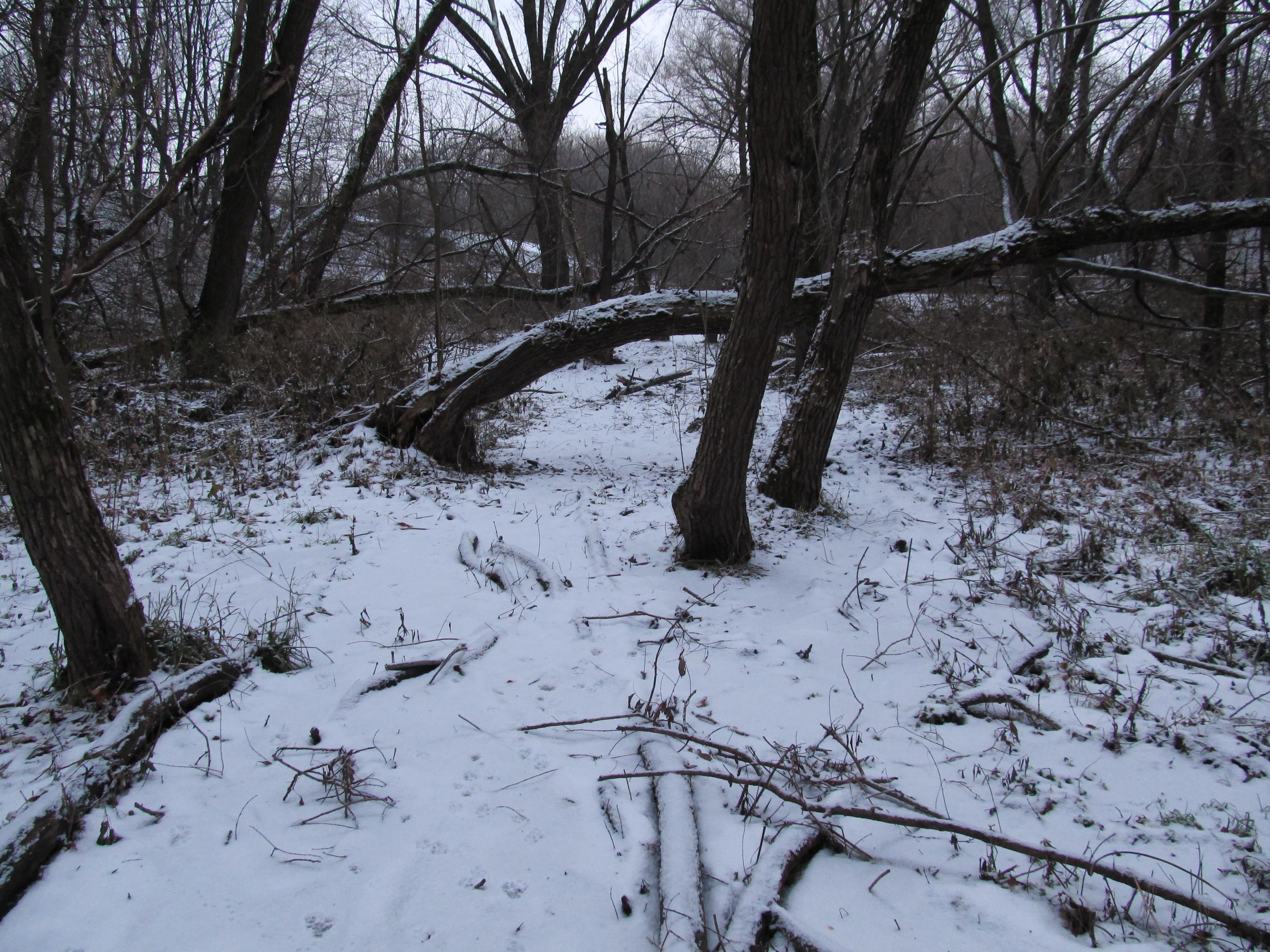 ВРязанской области ожидаются мокрый снег, ветер игололед