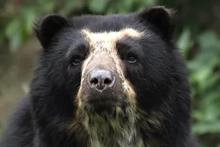 Вweb-сети интернет появилось видео медведицы снепослушным медвежонком