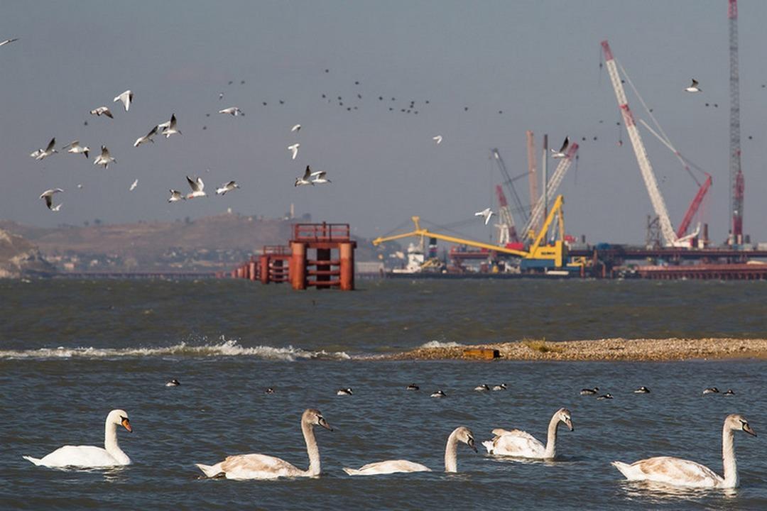Стройка моста вКрым привлекла огромнейшее количество дельфинов