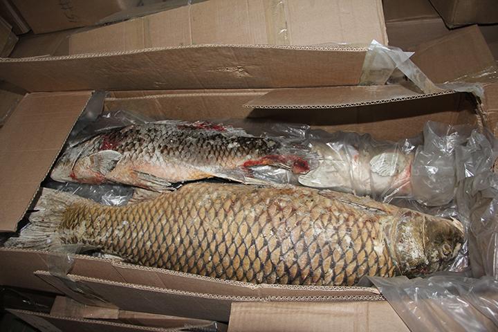 Руководителя компании из израильской АОподозревают впопытке контрабанды рыбы в КНР