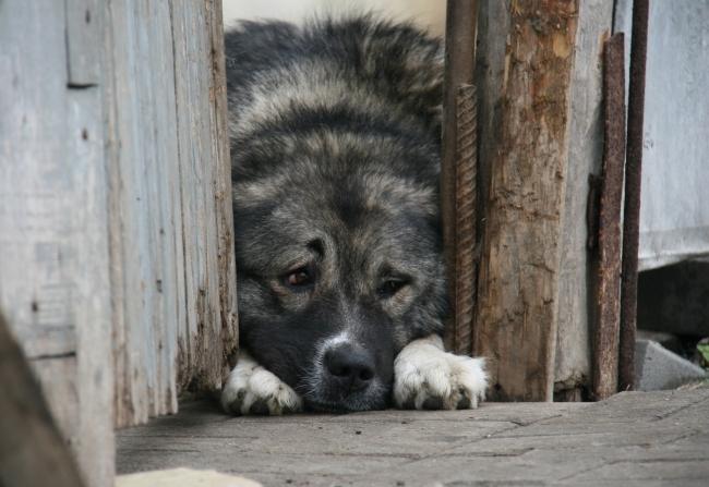 Полицейский наЮжном Урале застрелил собаку, которая кидалась напрохожих