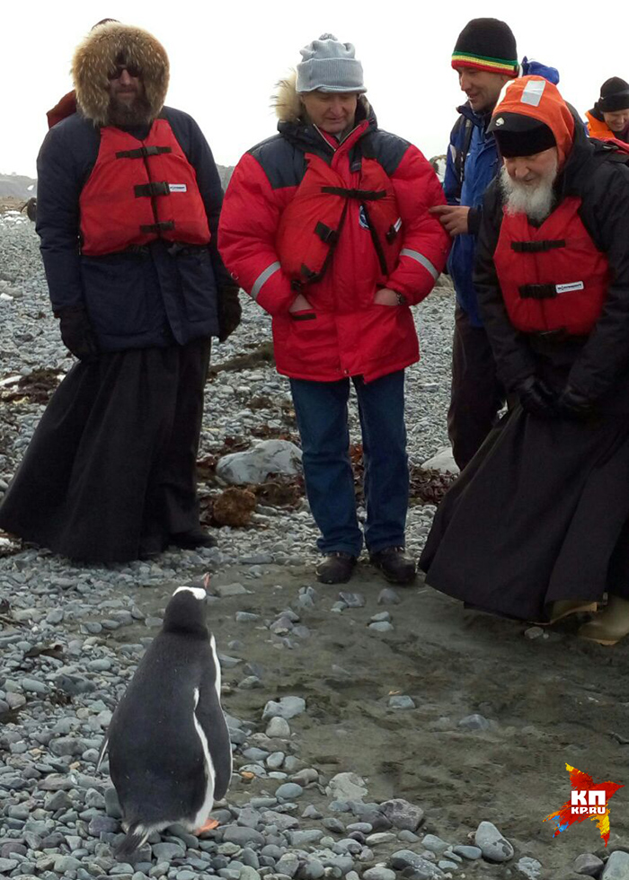 Дальше проведать симпатяг решил и главный гость: на лодке он доплыл до близлежащего острова, где обитает колония пингвинов Фото: Елена ЧИНКОВА