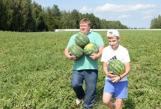 Вице-президент НОК Беларуси и Николай Лукашенко собирают белорусские арбузы. Фото: president.gov.by