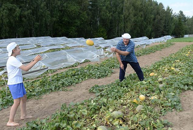 Президент Беларуси с сыном собираю дыни со своей бахчи. Фото: president.gov.by