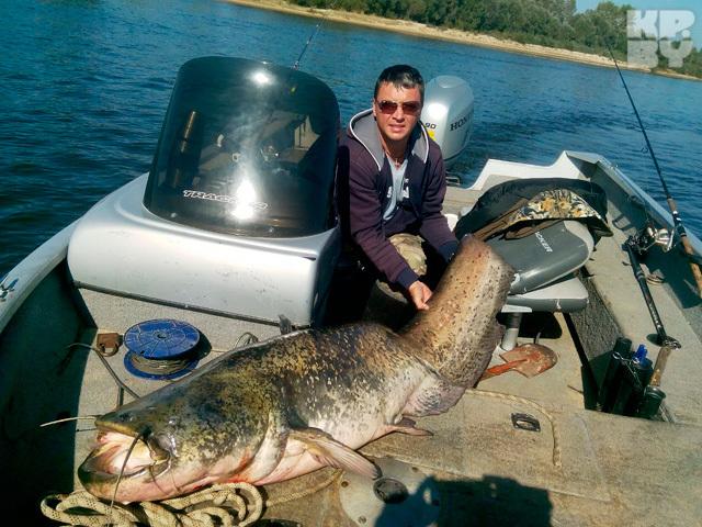 Многие рыбаки хвалят Дмитрия за то, что он не стал убивать сома-великана. Фото: Личный архив.