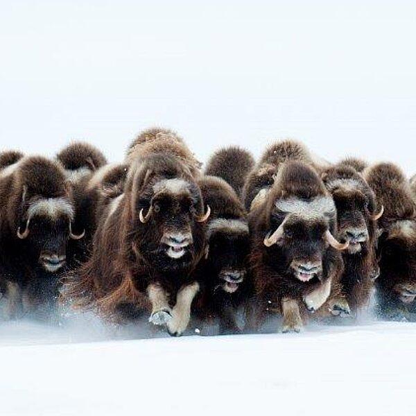 Фотовыставка «Живые моря Российской Арктики»