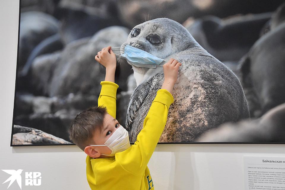 «Первозданная Россия» после пандемии: лучшие фото выставки