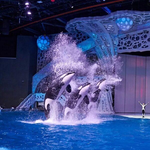 «Открытая тренировка» морских животных