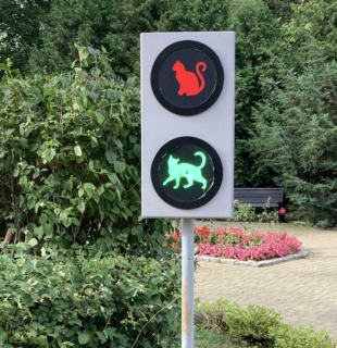кошачий светофор