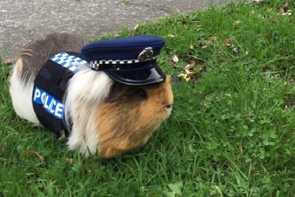 Констебль полиции Элиот. Фото: Полиция Новой Зеландии/Facebook