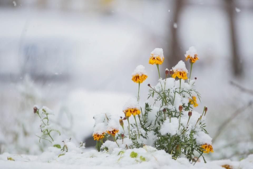 Ярославскую область в мае завалило снегом.