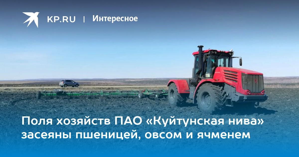 поля засеянные пшеницей занимали
