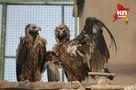 «Ветврачи регулируют количество «приплода» в зоопарке. Но животным все равно уже тесно!»