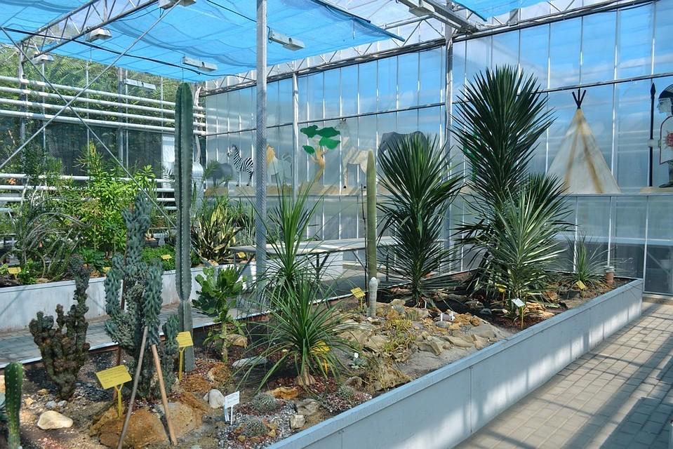 Картинки ботанического сада в ростове на дону