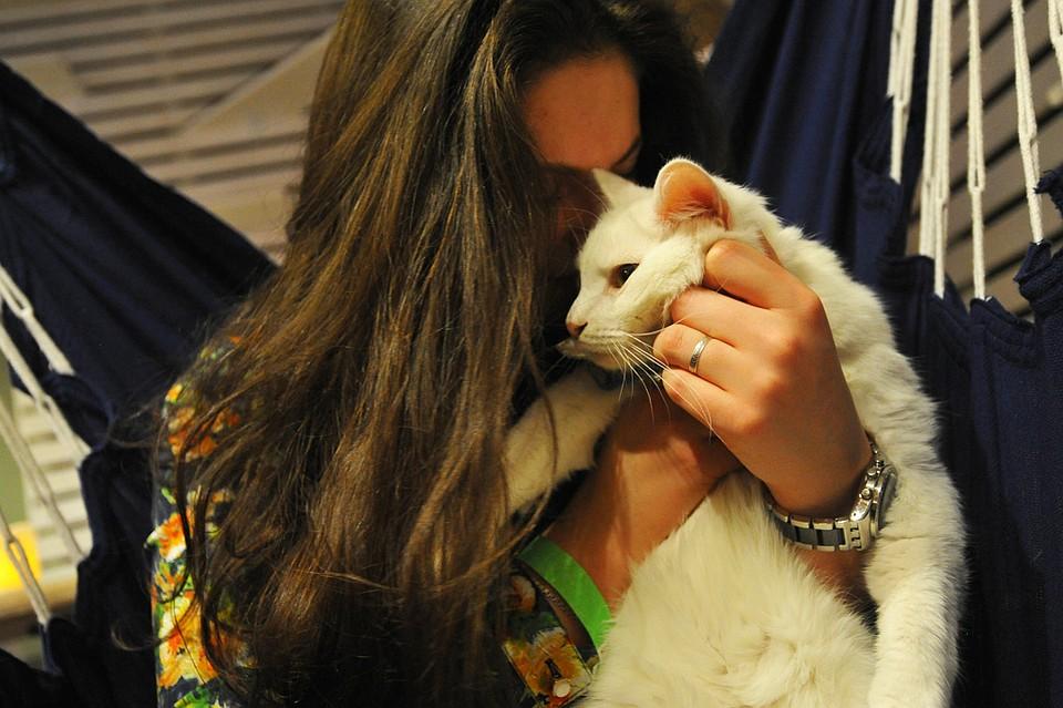 Картинки по запросу женщина с котами