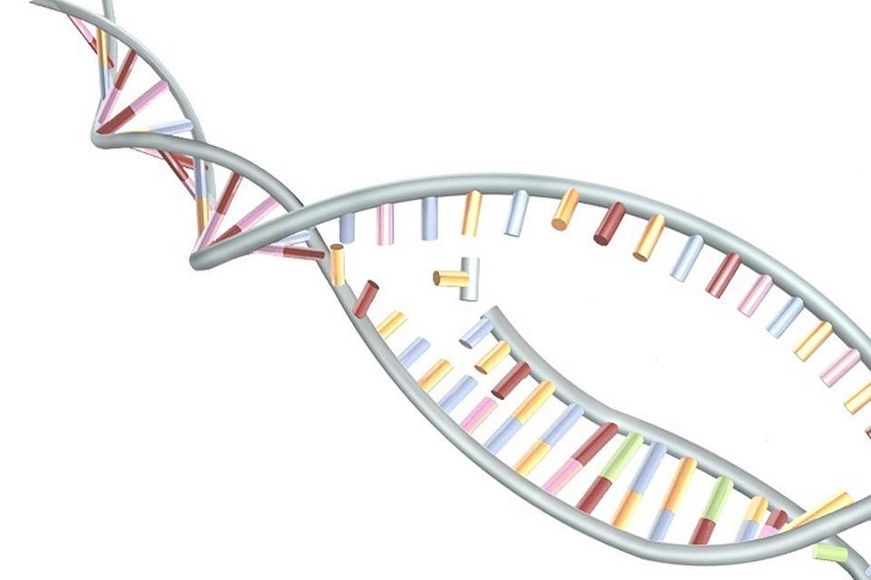 Схематическое изображение молекулы ДНК.