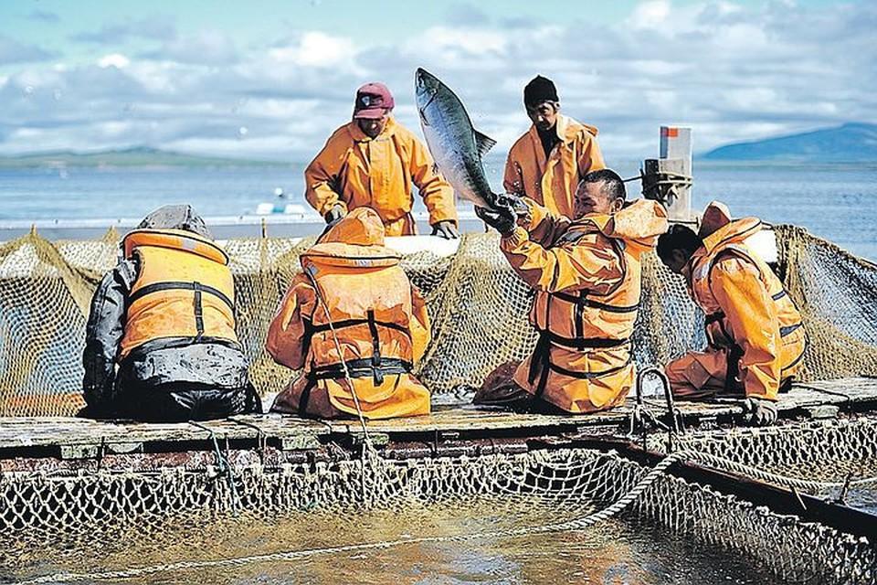 Рыбы наши рыбаки ловят много. Но куда она потом девается - большой вопрос