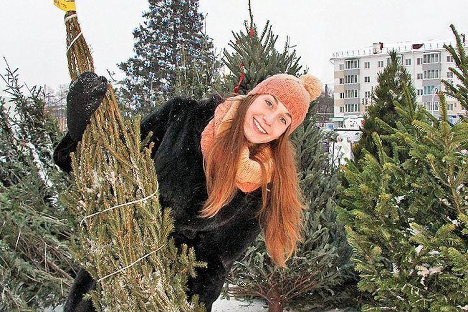 Согласно опросам, в этом году россияне решили не экономить на елках