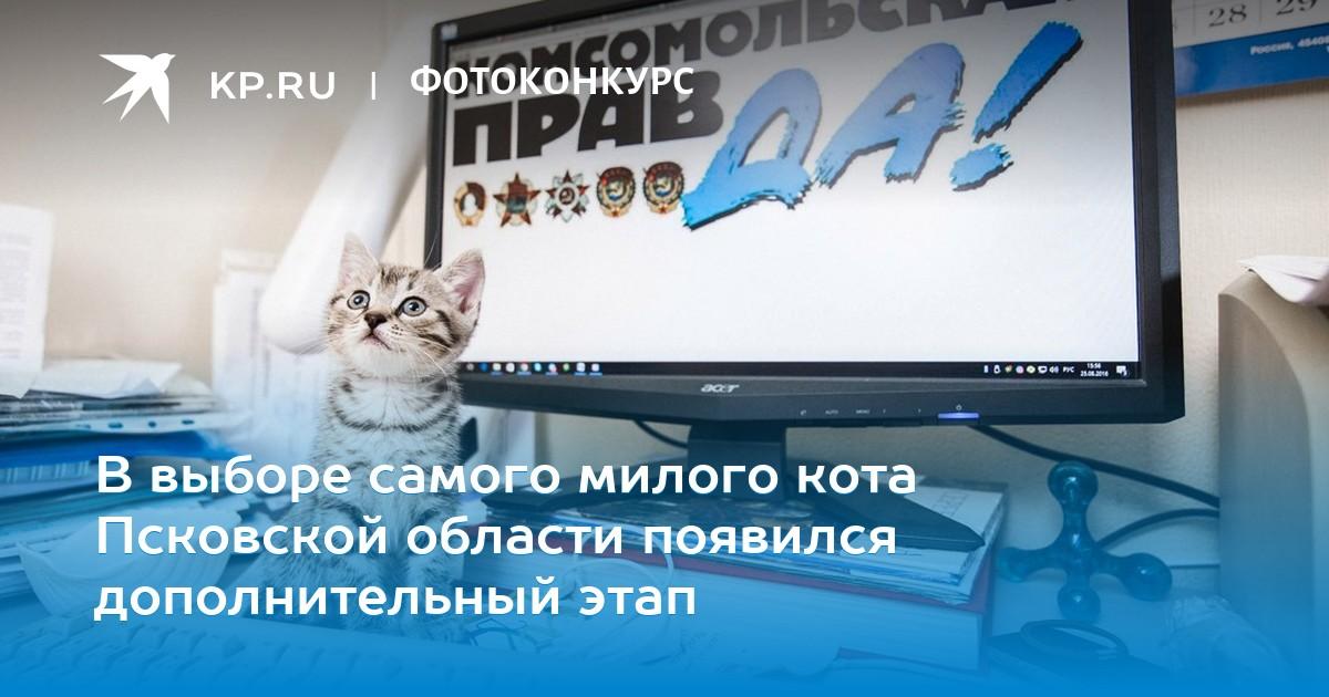 Фотографии самого милого котенка в мире | 630x1200
