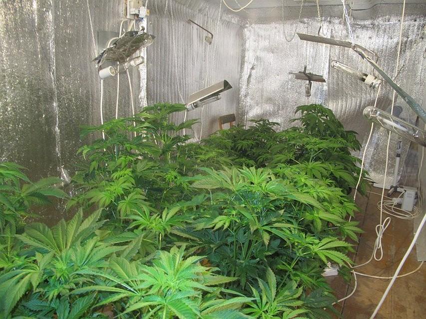 Поймали за выращивание конопли видео марихуана в венгрии