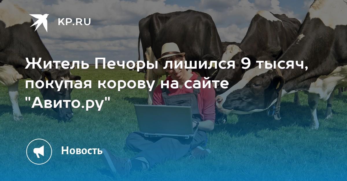 f6ea36ca5ed3 Житель Печоры лишился 9 тысяч, покупая корову на сайте