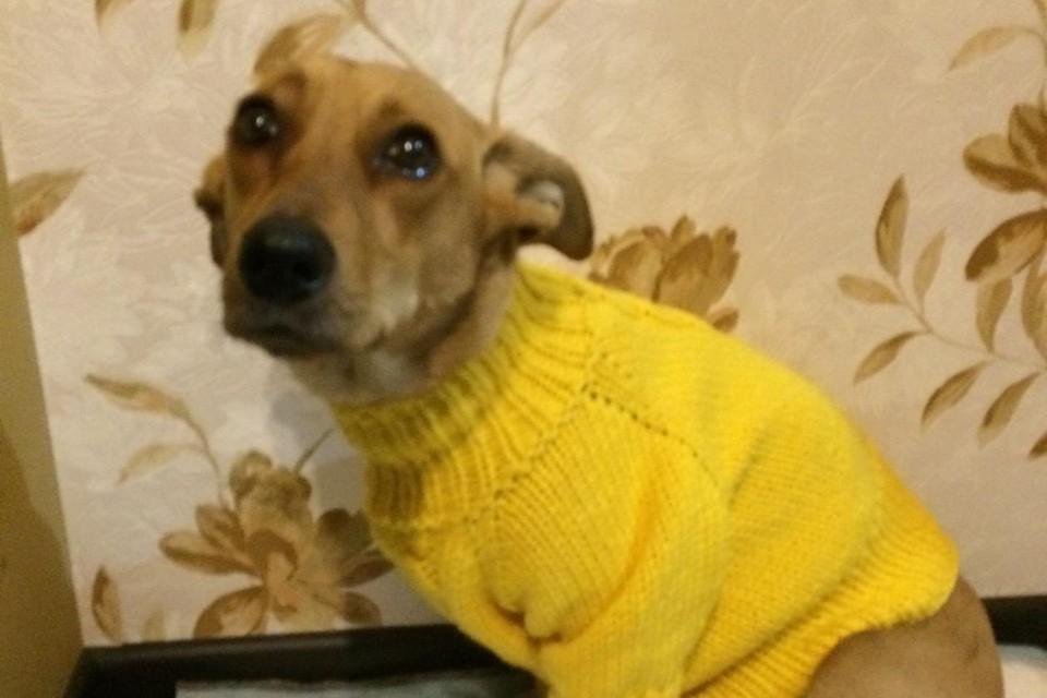 Дарина в свитере от Анжелы-спасительницы