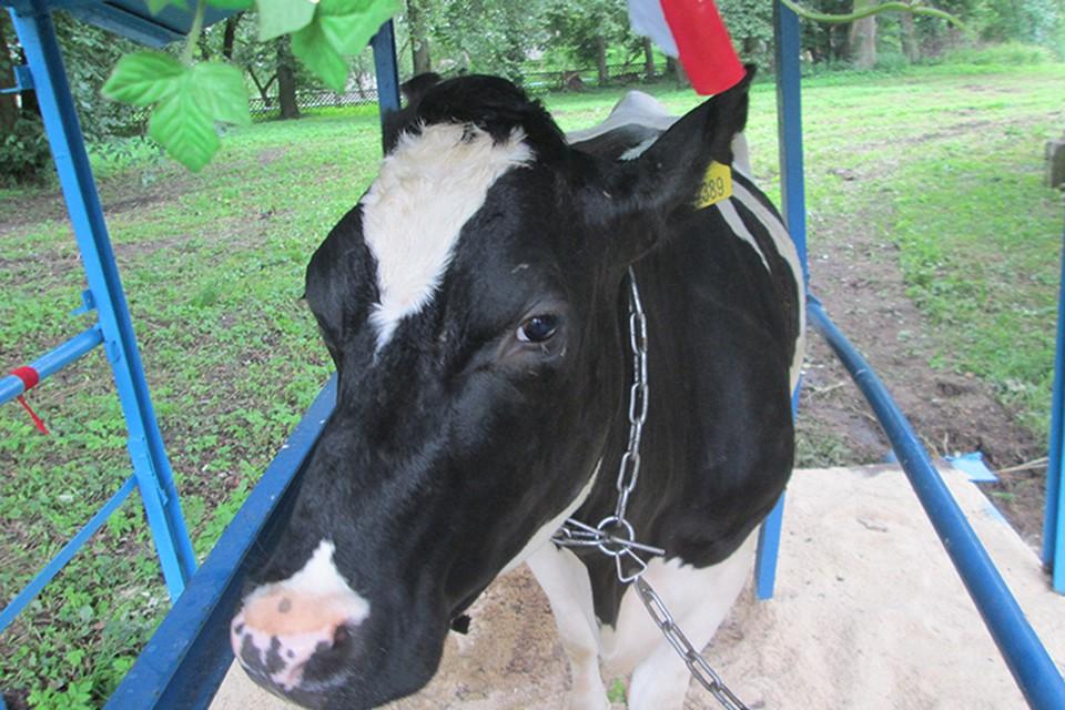 Укаринцы везли говядину в Беларусь без документов, их пришлось останавливать автоматной очередью.