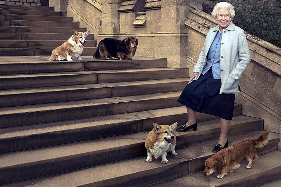 За всю жизнь у королевы Елизаветы II было около 30 собак.