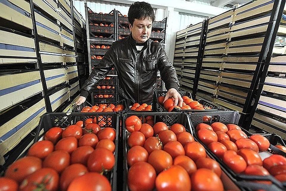 В скором времени может появиться временный запрет на ввоз помидоров и огурцов из Армении