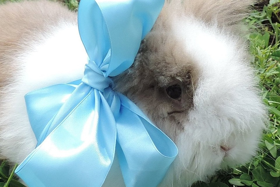 Кролик Пушок Фото: Ðколого-биологический центр Сочи