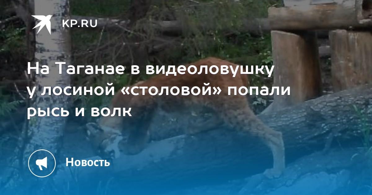 На Таганае в видеоловушку у лосиной «столовой» попали рысь и волк 79a6d8f433b