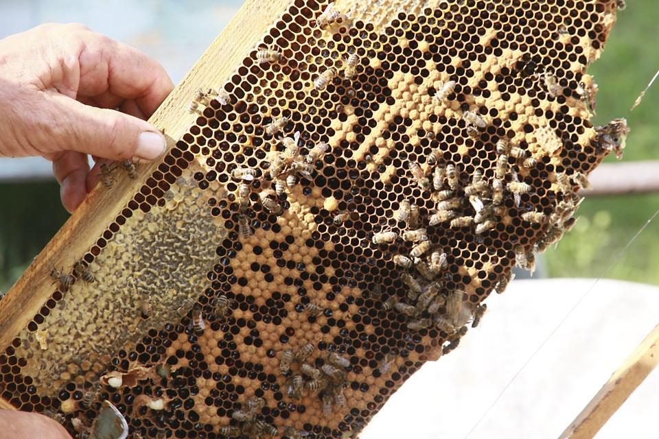 Австрийский садовод получил год тюрьмы за убийство пчёл