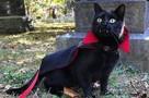 «К Хеллоуину готов!» Кот-Дракула не оставит никого равнодушным