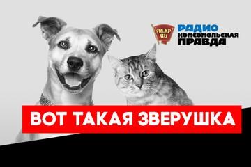 Йорк -  для души,  доберман  - для охраны: какая порода собак подойдет лично вам