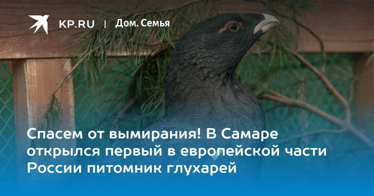 Спасем от вымирания! В Самаре открылся первый в европейской части России  питомник глухарей 9eed7283e88