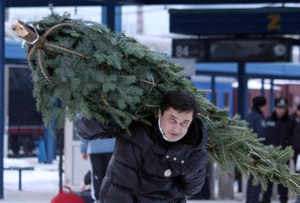 Елки в Липецке начнут продавать с 20 декабря