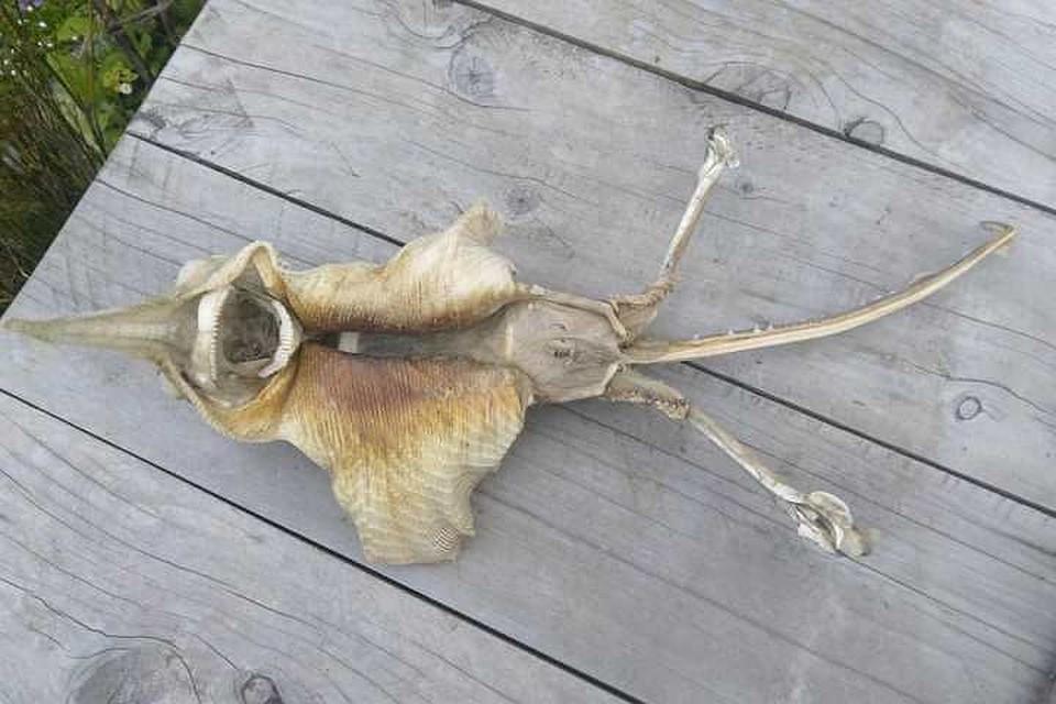 На пляже в Новой Зеландии нашли останки загадочного существа. Фото: facebook.com/@pandamaryy