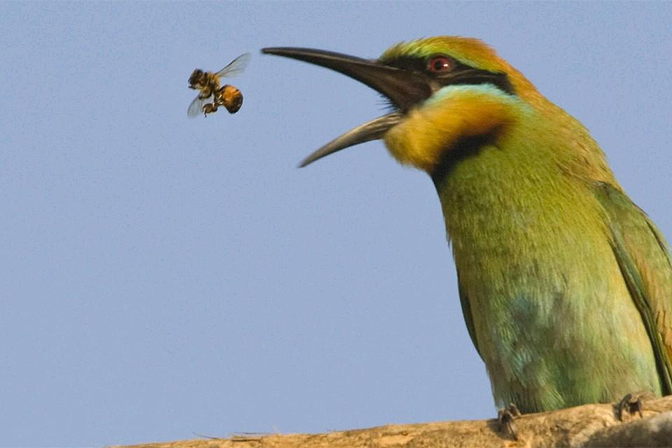Ученые уверены, что открытие подчеркивает гибкость в отношении воспроизводства насекомых.