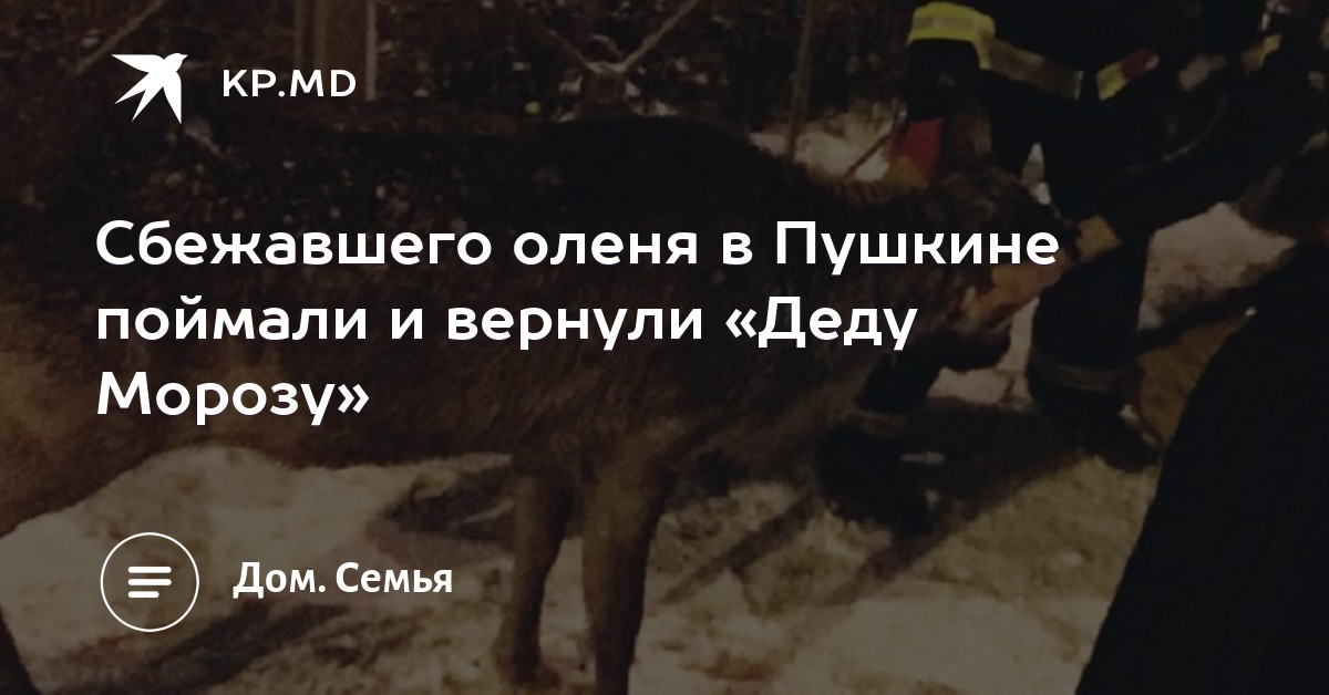 Сбежавшего оленя в Пушкине поймали и вернули «Деду Морозу» 3b96476ddc7a3