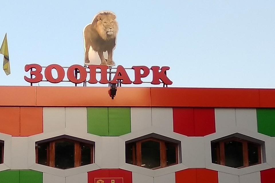 В Липецком зоопарке прошел День обезьян