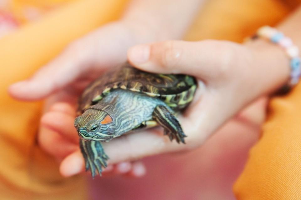 Черепахи теперь смогут ездить бесплатно